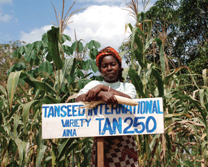 A Tanzanian farmer stands in front of her maize plot, where she grows DTMA variety TAN250
