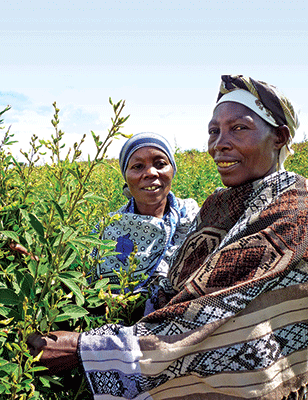 farmers-tanzania